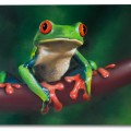 """The Frog"" Graffiti & Airbrush Mix 100x80cm"